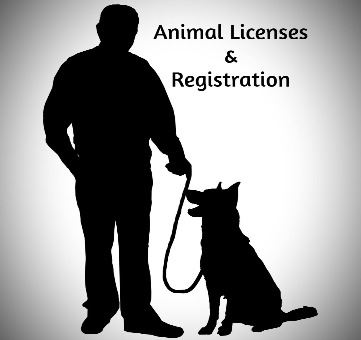 Animal Licenses and Registration